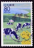En stämpel som tryckt i japan visar en Japans kust-landskap med betande kor — Stockfoto