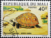 A stamp printed in mali shows testudo sulcata — Stockfoto
