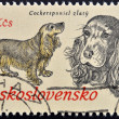 """A stamp printed in Czechoslovakia, shows Cocker Spaniel from the series """"Hunting Dogs"""" — Stock Photo"""