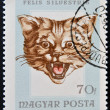 A stamp printed in Hungary showing cat (felis silvestris) — Stock Photo