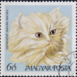 A stamp printed in Hungary showing angora cat — Stock Photo