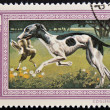 A stamp printed in Hungary shows image of a Hungarian agar dog — Stok fotoğraf