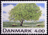 A stamp printed in Denmark shows Fagus sylvatica — Stock Photo