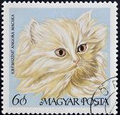 Znaczek wydrukowany na węgrzech wyświetlono kot angora — Zdjęcie stockowe