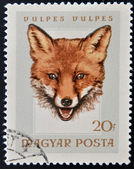 A stamp printed in Hungary showing fox (vulpes vulpes) — Stock Photo