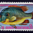 EQUATORIAL GUINEA - CIRCA 1974: A stamp printed in Guinea Ecuatorial dedicated to exotic fish shows lepomis megalotis, circa 1974 - Stock Photo