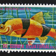 EQUATORIAL GUINE- CIRC1974: stamp printed in GuineEcuatorial dedicated to exotic fish shows botimacracantha, circ1974. — стоковое фото #13669532