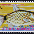 Foto de Stock  : EQUATORIAL GUINE- CIRC1974: stamp printed in GuineEcuatorial dedicated to exotic fish shows moenkhausioligolepis, circ1974