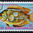 Stock Photo: EQUATORIAL GUINE- CIRC1974: stamp printed in GuineEcuatorial dedicated to exotic fish shows etropus maculatus, circ1974.