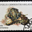 Stock Photo: MADAGASCAR - CIRC1992: stamp printed in Madagacar shows turbo marmoratus, circ1992