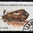 MADAGASCAR - CIRCA 1992: A stamp printed in Madagacar shows conus textile, circa 1992 — Stock Photo