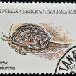 Stock Photo: MADAGASCAR - CIRC1992: stamp printed in Madagacar shows harpamouretta, circ1992
