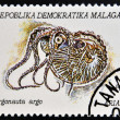 Stock Photo: MADAGASCAR - CIRC1992: stamp printed in Madagacar shows argonautargo, circ1992