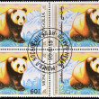 MONGOLIA - CIRCA 1990: stamp printed in Mongolia shows a giant panda, circa 1990 — Stock Photo