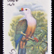 OMAN - CIRC1973: stamp printed in Omdedicated to exotic birds shows new ireland fruit pigeon , circ1973 — стоковое фото #13669736