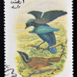 OMAN - CIRCA 1973: A stamp printed in Oman dedicated to exotic birds shows lessersuperb bird of paradise, circa 1973 — Foto de Stock