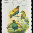 OMAN - CIRCA 1973: A stamp printed in Oman dedicated to exotic birds shows magnificent bird of paradise, circa 1973 — Stock Photo