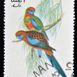 Foto de Stock  : OMAN - CIRC1973: stamp printed in Omdedicated to exotic birds shows pennants paraheet, circ1973