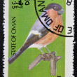 STATE OF OMAN - CIRC1977: stamp printed in State of Omdedicated to birds shows bullfinch, circ1977 — стоковое фото #13669873