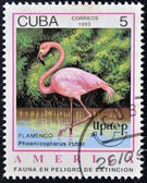 A stamp printed in Cuba dedicated to endangered wildlife, shows flamenco, phoenicopterus ruber — Stock Photo