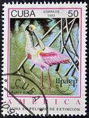 A stamp printed in Cuba dedicated to endangered wildlife, shows Seviya, ajaia ajaja — Stock Photo