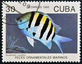CUBA - CIRCA 1992: A stamp printed in Cuba dedicated to ornamental fish, shows abudefduf saxatilis, circa 1992 — Stock Photo