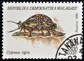 MADAGASCAR - CIRCA 1992: A stamp printed in Madagacar shows cypraea tigris, circa 1992 — Stock Photo