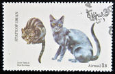 OMAN - CIRCA 1973: stamp printed in State of Oman dedicated to cats shows silver tabby and blue burmese, circa 1973 — Stock Photo