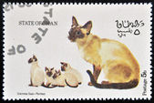 OMAN - CIRCA 1973: stamp printed in State of Oman dedicated to cats shows siamese seal - pointed, circa 1973 — Stock Photo