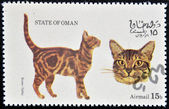 OMAN - CIRCA 1973: stamp printed in State of Oman dedicated to cats shows brown tabby, circa 1973 — Stock Photo