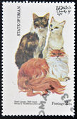 OMAN - CIRCA 1973: stamp printed in State of Oman dedicated to cats shows shell cameo, odd-eyed white and the maine coon cat, circa 1973 — Stock Photo