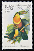 OMAN - CIRCA 1973: A stamp printed in Oman dedicated to exotic birds shows red breasted toucan, circa 1973 — Stock Photo