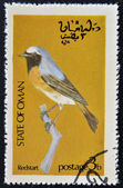 STATE OF OMAN - CIRCA 1977: stamp printed in State of Oman dedicated to the birds shows Redstart, circa 1977 — Stock Photo