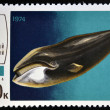 A stamp printed in Russia shows Greenland whale — Stock Photo