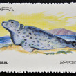 Stamp printed in Staffa shows grey seal — Stock Photo