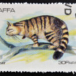Stamp printed in Staffa shows wildcat — Stockfoto