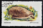 Stamp printed in Staffa shows hedgehog — Stock Photo