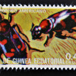 Stock Photo: EQUATORIAL GUINE- CIRC1973: stamp printed in Guinededicated to insects shows scavenger beetle American, circ1973