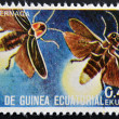 Stock Photo: EQUATORIAL GUINE- CIRC1973: stamp printed in Guinededicated to insects shows firefly, circ1973