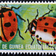 Foto de Stock  : EQUATORIAL GUINE- CIRC1973: stamp printed in Guinededicated to insects shows ladybug, circ1973