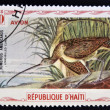 HAITI - CIRCA 1975: A stamp printed in Haiti shows Long-billed curlew, circa 1975 — Photo