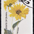 Foto de Stock  : OMAN - CIRC1977: stamp printed in Omdedicated to flowers shows Heliopsis, circ1977