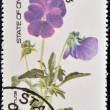Royalty-Free Stock Photo: OMAN - CIRCA 1977: stamp printed in Oman dedicated to flowers shows viola cornuta, circa 1977