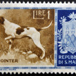 Stock Photo: SAN MARINO - CIRC1956: stamp printed in SMarino shows Pointer, circ1956
