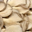Edible mushrooms chopped — Foto Stock