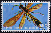 EQUATORIAL GUINEA - CIRCA 1973: stamp printed in Guinea dedicated to insects shows giant sirex, circa 1973 — Stock Photo