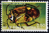EQUATORIAL GUINEA - CIRCA 1973: stamp printed in Guinea dedicated to insects shows fruit bug, circa 1973 — Stock Photo
