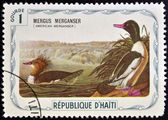 HAITI - CIRCA 1975: A stamp printed in Haiti shows Mergus Merganser (American Merganser), circa 1975 — Stock Photo