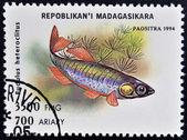 MADAGASCAR - CIRCA 1994: stamp printed in Madagascar dedicated to fish shows eudulus heteroclitus, circa 1994 — Foto Stock