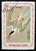 HAITI - CIRCA 1980: A stamp printed in Haiti shows Sterna Dougalli (Roseate tern), circa 1980 — Stock Photo